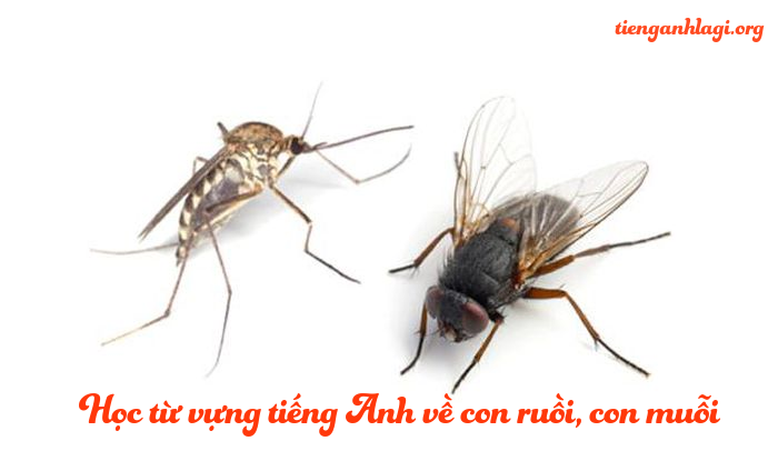 Con ruồi con muỗi trong tiếng Anh