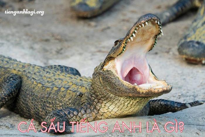Cá sấu tiếng Anh là gì