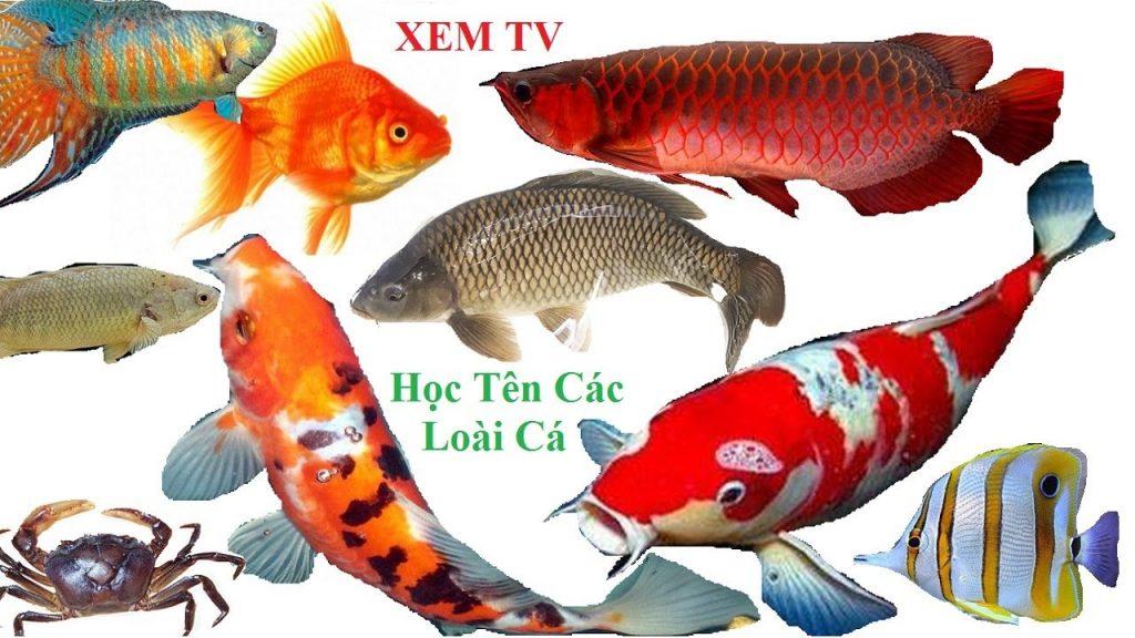 học tên các loại cá bằng tiếng Anh